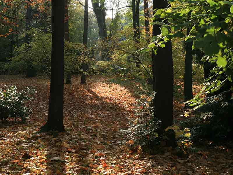 Herbst Ferienwohnung Meier